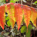 The First Blush Of Autumn thumbnail