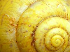 Artful time (haikulinde) Tags: texture nature animal yellow bravo snailshell peopleschoice outstandingshots abigfave shieldofexcellence colorphotoaward ultimateshot superbmasterpiece goldenphotographer flickrdiamond