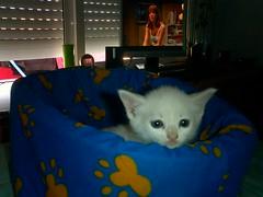 UNA FRONTAL! (ivocampos1983) Tags: la nueva gatita
