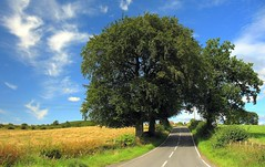 Kibbleston Road (Scott Foy) Tags: road trees canon scotland fields a620 renfrewshire howwood kilbarchan specnature scofo76utatafeature kibblestonroad scottfoy