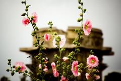 Augarten (Mad_T) Tags: vienna wien park flowers austria sterreich bokeh 28135mm flakturm augarten canonef28135mmf3556isusm kitschig lauraashley geo:lat=48225773 geo:lon=16372869