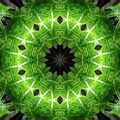 Fern (Bill Brown) Tags: fern kaleidoscope mandala kaleidescope kaleidoscopes kaleidoscopesonly