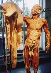Body Worlds - Skin Man - by Paul Stevenson