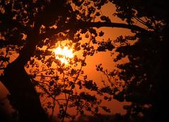 A Cherry Blossom Sunset (` Toshio ') Tags: sunset festival cherry colorful blossoms cherryblossom yoshino tidalbasin washintondc toshio