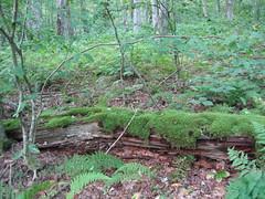 IMG_0952.jpg (Steven Cloud) Tags: green log mossy decomposing