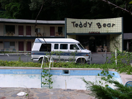 Kudzu goes for a swim at the Teddy Bear Motel