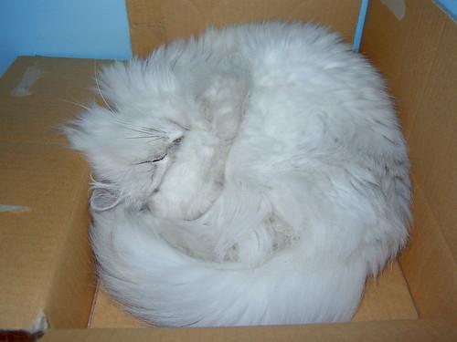 Mimi~小紙箱窩不膩
