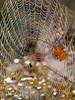 Spiderweb (laszlofromhalifax) Tags: autumn fall topv111 spider leaf bokeh web spiderweb olympus getty zd 111v1f 40150mm topvaa bokehsoniceseptember bokehsoniceseptember17