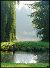 NL/Nature/AutumnalLight (oopsfotos.nl) Tags: autumn trees light sun sunlight mist holland nature water netherlands morninglight haze earlymorning thenetherlands grasses oop nieuwegein batau topphotoblog