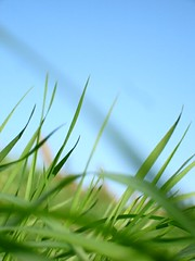grass (e.v.r.i.e.l) Tags: blue sky green grass meadow prairie campagne