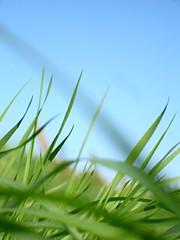 grass (e.v.r.i.e.l) Tags: blue sky green grass meadow prairie campagne