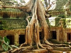 Nature Strikes Back, Mammoth Tree, Ta Prohm Temple, Angkor, Cambodia (Alexander Marc Eckert) Tags: tree nature temple back cambodge cambodia kambodscha khmer mammoth angkor taprohm strikes tempel mammutbaum cambodiaalbum plantsalbum