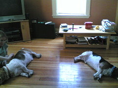 Bookend Bassets