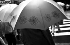 no place for the Sun (ajpscs) Tags: street people bw wet rain japan umbrella japanese tokyo nikon wind streetphotography d100 blackwhtie monokuro ajpscs norulesnolimitationsnoboundariesitslikeanart noplaceforthesun
