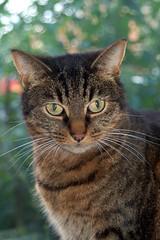 Laurel at the window (maire52) Tags: laurel catsandwindows