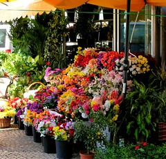 Spain - Cdiz (Chris&Steve) Tags: flowers espaa flores flower floral spain flora fx andalusia cdiz rb flowershop cyp heatwaves 5photosaday plazadelasflores 10millionphotos