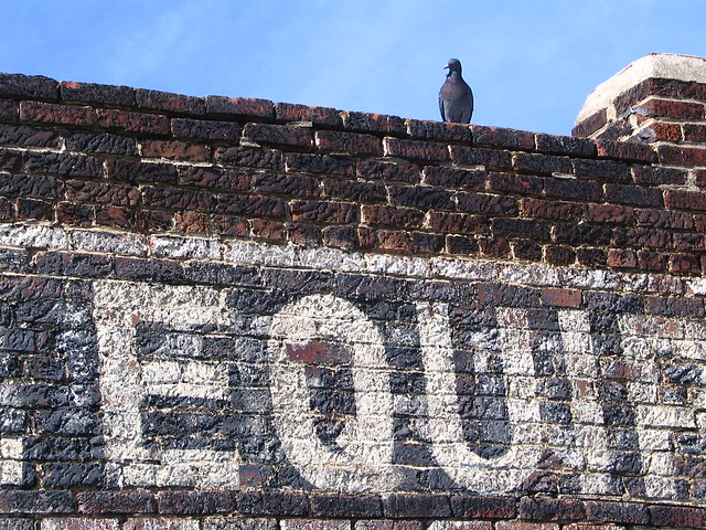 L Equipment Co. and pigeon