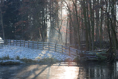 Winter (tribsa2) Tags: nederlandvandaag winter hiver ice ijs bos bomen boom forest foret
