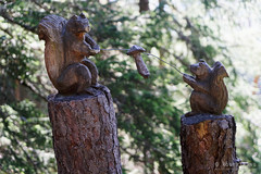 20180709-36-Squirrel carving (Roger T Wong) Tags: 2018 alps europe montblanc rogertwong sel2470z sony2470 sonya7iii sonyalpha7iii sonyfe2470mmf4zaosscarlzeissvariotessart sonyilce7m3 switzerland tmb tourdumontblanc bushwalk carvings hike outdoors summer tramp trek walk