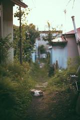 Leica M 240 & SUMMILUX-M 50mm F1.4 ASPH (leicafanboy..) Tags: leica 240 summiluxm 50mm f14 asph cat japan japanese