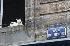 Rue des Herbes (just.Luc) Tags: cat chat kat katze window fenster fenêtre raam sign straatnaambord letters lettres animal dier tier bordeaux gironde nouvelleaquitaine pet huisdier france frankrijk frankreich francia frança blue bleu azul blau blauw