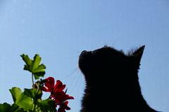 Caska (Daisuke Ido) Tags: caska gatto cat nero black fiore flower foglie leaves catmoments