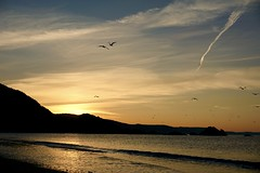 morning flight (mark1830) Tags: gulls sunrise sea cornwall beach glow golden rocks looe wave ripple coast plaidy