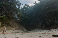 20180724-00038.jpg (tristanloper) Tags: tristanloper creativecommons film nikonf6 california bigsur pacificcoast highway1 pacificocean pfeifferbeach