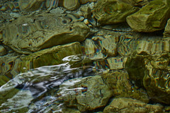 Riflessi... (paolo-p) Tags: zadnjatrenta acqua water riflessi reflections forme shapes colori colours slovenia