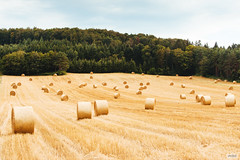Rolled-Up (The Hobbit Hole) Tags: agriculture summer nikon d700 hay austria wienerwald harvest 70300mmf4556gvr