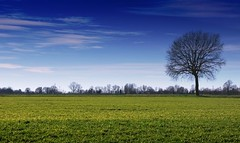 Peace and Love (dado.gianluca) Tags: canon cielo albero nuvole lombardia italy esposizione