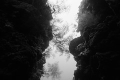 Slit (Gomen S) Tags: bw blackandwhite underwater bali indonesia asia tropical 2018 afternoon summer coral seafan sony sonyflickraward rx100v nauticam wildlife nature