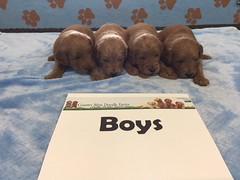 Dakota Boys pic 4 4-22
