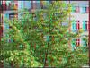 20180422_JPL_02_Anaglyph (Chaitanya Hari) Tags: baum knospen frühling fruehling orteberlinzuhause frã¼hling