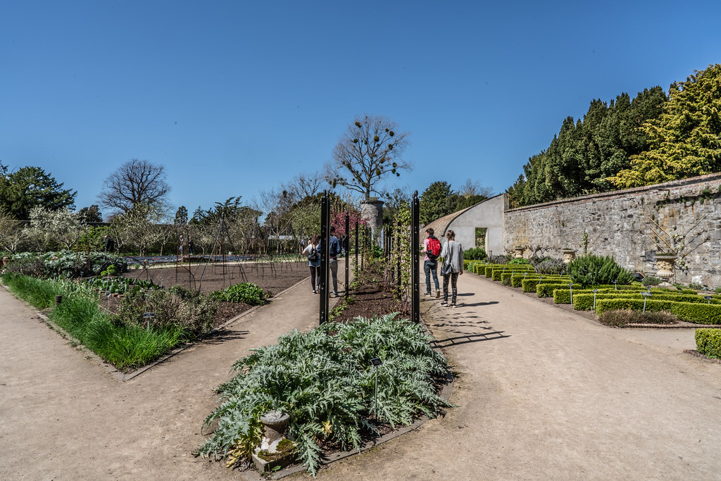 VISIT TO THE NATIONAL BOTANICAL GARDENS [GLASNEVIN DUBLIN]-138603