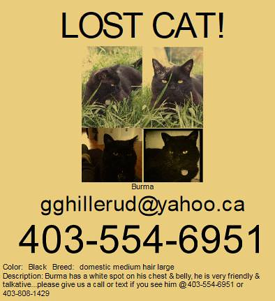 LOST: Black male cat with white spot on chest in #MountPleasant. Pls contact 403-554-6951 or 403-808-1429 or gghillerud@yahoo.ca. Pls RT, share to help locate BURMA. YYC Pet Recovery shared Keek Fox's post. LOST: Black cat in Mount Pleasant. Posting for a