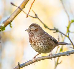 Teenager. (Omygodtom) Tags: teenager wildlife bird oaksbottom nikon70300mmvrlens dof d7100 digital bokeh branch usg usgs
