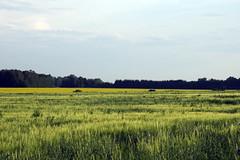 Viljapõllud (Jaan Keinaste) Tags: pentax k3 pentaxk3 eesti estonia loodus nature maastik landscape viljapõld põld field