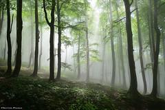 Stayin Alive (Hector Prada) Tags: forest bosque spring primavera light luz backlight contraluz trees árbol leaves hojas beechforest hayedo nature naturaleza silhouette sunny urbasa navarra