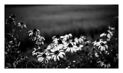 untitled (kouji fujiwara) Tags: blackandwhite blackwhite fujifilm fujifilmxpro2 xpro2 fujinon xf35mmf1 4 35mm f14 xf