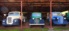 Yellow, Green and Blue (Ggreybeard) Tags: austin thames relic abandoned museum automobile car vehicle shed garage colour yellow green blue headlamps radiators bumpers veteran old rusty weathered rescued trucks flatbacks lorry