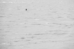 Swimming Alone (CoolMcFlash) Tags: swimmer summer bw blackandwhite bnw person negativespace minimalistic minimalism minimalistisch simple water fujifilm xt2 swim schwimmen schwimmer wasser sw schwarzweis candid lake see fotografie photography head kopf xf18135mmf3556r lm ois wr