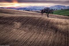 Terra 2 (SDB79) Tags: molise ururi terra albero tramonto campagna