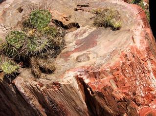 petrified wood with cactus