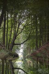 Mystical forest... (PvRFotografie) Tags: nederland holland nature natuur boom bomen bos tree trees forrest water beek rotated reflection sonyilca99m2 minolta minoltaaf35105mmf3545 vintagelens mystical