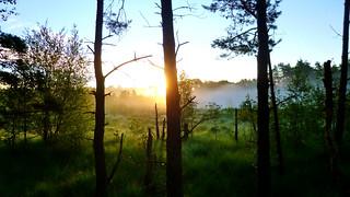 Sunrise With Many Fog