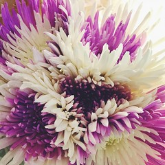 209/365/7 (f l a m i n g o) Tags: 365days project365 2018 20th july white purple store bouquet flower