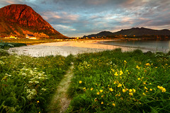 The beach at Hov (Trond Strømme) Tags: nordland beach clouds flowers grass landscape lofoten meadow midnightsun mountains norway outdoor path people sand sea shore sky sunset waves gimsøya mountain hoven vågan