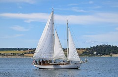 Schooner Suva circa. 1925 Sails the Penn Cove Waters - Port of Coupeville (SonjaPetersonPh♡tography) Tags: washington washingtonstate stateofwashington nikon nikond5300 whidbeyisland penncove nationalregisterofhistoricplaces historicbuildings historicsite coupeville townofcoupeville historiccoupeville oldbuildings portofcoupeville coupevillewharf