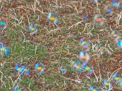 Colourful Soap Bubbles ... (Irene, W. Van. BC) Tags: colourfulsoapbubbles bubbles soapbubbles displays colours colourful fun funtime playground play green grass outdoors outdoorscenes parkscenes 1001nights 1001nightsmagiccity 1001nightsmagicwindow playtime playtimescenes